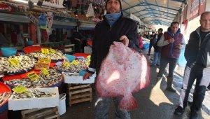 Balıkların paşası 750 liraya alıcı buldu