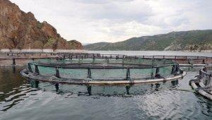 Bozkırda yetişen alabalıklar Uzakdoğu'ya ihraç ediliyor