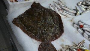 Bu kalkan balığının fiyatı dudak uçuklatıyor