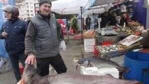 Marmara'da dev köpek balığı yakalandı