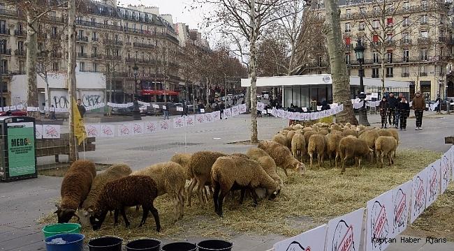 Paris'in ortasında koyunlu gösteri
