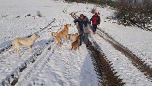 Başıboş köpekleri eksi 13 derecede ormanlık alana bıraktılar