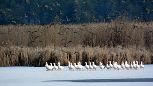 Bin 100 rakımlı göl buz tuttu, kartpostallık görüntüler oluştu