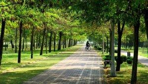 İstanbul'daki yeşil alan oranı; yüzde 2,2