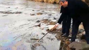 Kızılırmak'ta balık ölümü