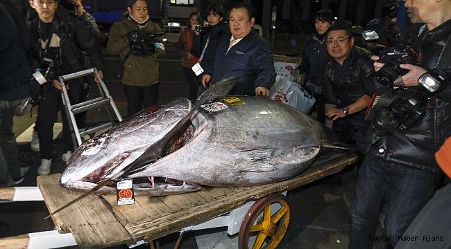 Tokyo'da balık mezatında rekor fiyat, 16 milyon liraya satıldı