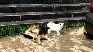Güneşlenen kedi ile köpeğin dostluğu