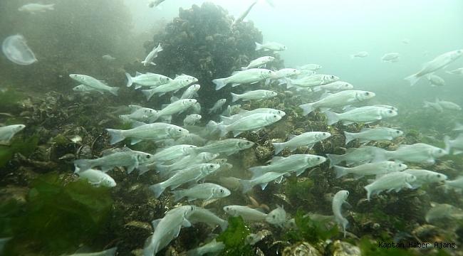 İzmit Körfezi'nde 30 türde avcılık yapılır hale geldi