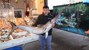 Kılıç balığı koyun fiyatına satıldı
