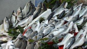 Ordu'da tezgahları kültür balıkları süslüyor