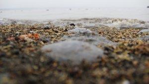 Denizanası ile temastan kaçınılmalı