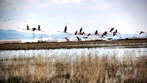 Flamingolar Kayseri'de
