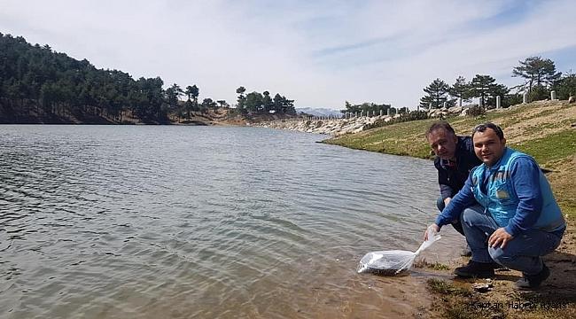 Göletlere 65 bin adet sazan balığı yavrusu bırakıldı