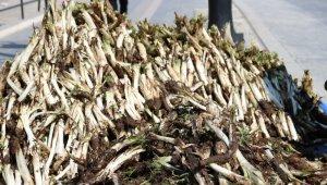 Kenger bitkisi tezgahlarda yerini aldı