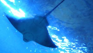 Keçiören'de teleferik ve deniz dünyası çocuklara ücretsiz