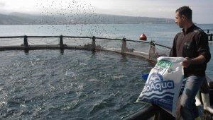 Türkiye'de iç sularda ve denizlerde yetiştirilen kültür balığında artış