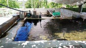 Suyu boşaltılan tesiste 400 kilo balık telef oldu