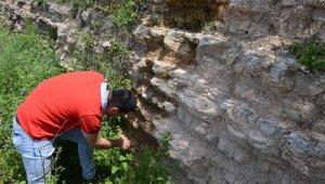 Zonguldakta dinazor çağı deniz canlılarına ait fosil bulundu