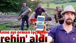 Anne ayı, orman işçilerini 'rehin' aldı