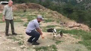 Yaralı Mısır akbabası tedavisini ardından doğaya salındı