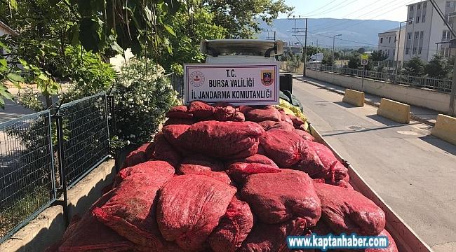Bursa'da 12 ton kaçak midye ele geçirildi
