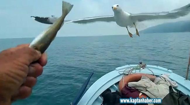Her gün denizde onu takip ediyorlar