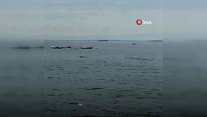 Pendik'te yunusların denizdeki gösterisi kamerada