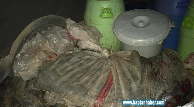 Didim'de 500 kilo deniz patlıcanı ele geçirildi
