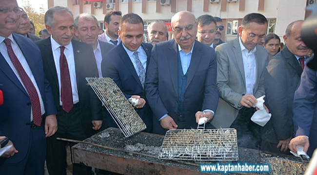 Fatsa'da Hamsi Festivali düzenlendi
