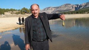 Sulama göletinde balıklar kıyıya vurdu