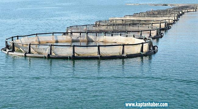 Türkiye'nin çiftlik balığı üretimi 10 yılda ikiye katlandı