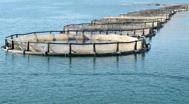 Su ürünleri ihracatının yeni yıldızı: Karadeniz somonu