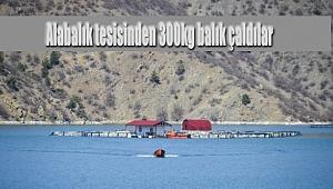 Alabalık tesisinden 300 kg balık çaldılar
