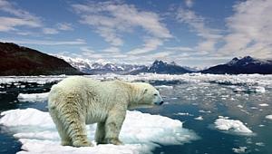 Kuzey Buz Denizi'nde Rekor 'Erime'