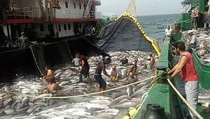 Moritanya'ya avlanmaya giden bin balıkçımızdan güzel haber