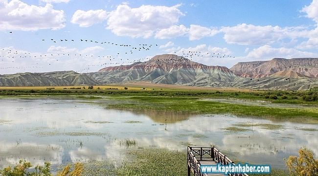 Nallıhan Kuş Cennetine göçmen kuşlar gelmeye başladı