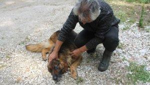 Balık çiftliğini koruyan köpeği yaraladılar, somon balıklarını çaldılar