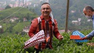 Çay toplamak için Rize'ye gelenlerin sayısı 7 bine ulaştı