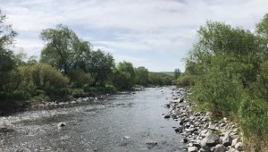 Kars Barajı'ndan balıklara 'can suyu' verildi