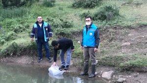 Simav'daki göletlere 40 bin adet pullu sazan balığı yavrusu bırakıldı