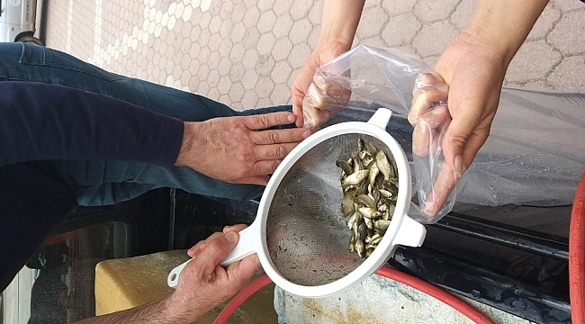 Sivav'ın gölleri balıklandırıldı