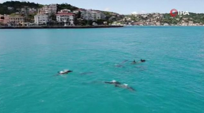 Yunuslar turkuaza bürünen İstanbul Boğazı'nı süsledi