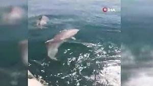Yunusların denizde gösteri şöleni renkli anlar sahne oldu