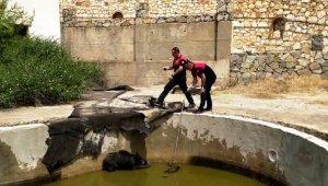 Yüzme havuzuna düşen anne domuz ve yavrularını itfaiye ekipleri kurtardı