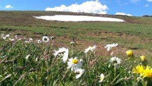 Ardahan'da yaz ve kış bir arada