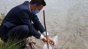 Bilecik'teki 9 gölete 54 bin sazan yavrusu salındı