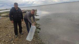 İpsala'daki göletlerde balıklandırma çalışmaları yapıldı