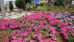 Kaş caddeleri çiçek bahçesine dönüyor