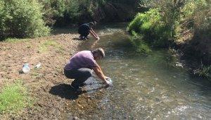 Çan'daki balık ölümleri araştırılıyor