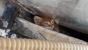 Çaresiz kalan yavru kedinin fotoğraftaki zor anları yürek parçaladı